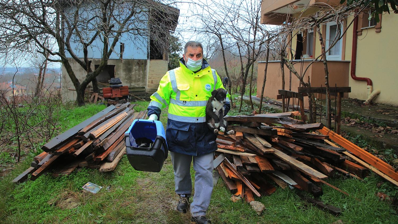 Sakarya Büyükşehir anne köpek ve yavrularını koruma altına aldı